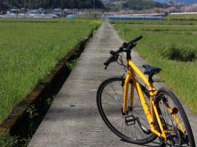 小田川沿いをサイクリング